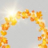 Nedgånglönnlövram med den delikata solen för garnering Mall för gräns för höstsidor vektor för bild för designelementillustration royaltyfri illustrationer