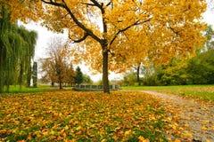 Nedgånglönnträd Arkivfoto