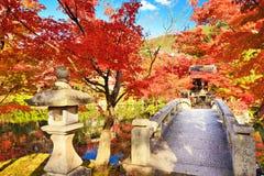 Nedgånglövverk i Kyoto Royaltyfria Foton