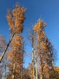 Nedgånglövverk med bakgrund för blå himmel arkivfoton