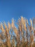 Nedgånglövverk med bakgrund för blå himmel arkivbilder