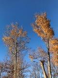 Nedgånglövverk med bakgrund för blå himmel royaltyfri bild