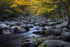 Nedgånglövverk och bergström, Great Smoky Mountains fotografering för bildbyråer