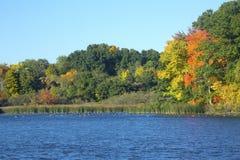 Nedgånglövverk och gäss på Mill dammet, Connecticut Arkivfoton
