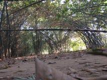 Nedgånglövverk på bambuskogen Royaltyfri Bild