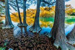 Nedgånglövverk på den kristallklara Frio floden i Texas royaltyfri fotografi