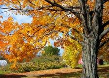 Nedgånglövverk på den Vermont lantgården Royaltyfria Bilder