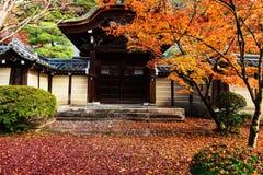 Nedgånglövverk på Eikando i Kyoto Arkivbilder