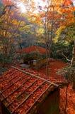 Nedgånglandskap av en härlig trädgård i Kyoto Japan, med sikt av en träaxel i skogen av brännheta träd för japansk lönn royaltyfri bild