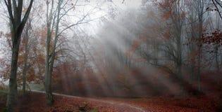 Nedgånglandskap i skogen Royaltyfria Foton