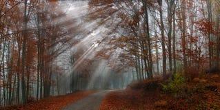 Nedgånglandskap i skogen Arkivbilder