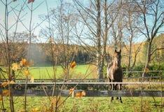 Nedgånglandskap med en nyfiken häst royaltyfria bilder