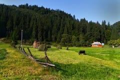 Nedgångmorgon i Carpathians Arkivbilder