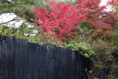 Nedgångsäsong Arashiyama Kyoto Japan Royaltyfri Foto