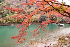 Nedgångsäsong Arashiyama Kyoto Japan Arkivbild