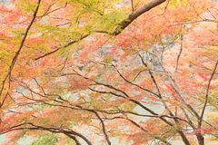 Nedgångsäsong Arashiyama Kyoto Japan Arkivfoto