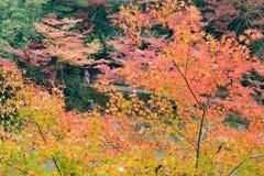 Nedgångsäsong Arashiyama Kyoto Japan Fotografering för Bildbyråer