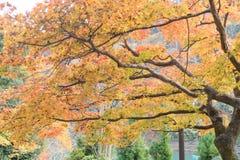 Nedgångsäsong Arashiyama Kyoto Japan Royaltyfria Foton