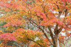 Nedgångsäsong Arashiyama Kyoto Japan Arkivbilder