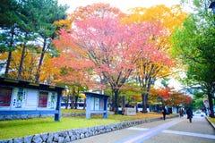 Nedgångsäsong av den Nara staden, Japan med trevlig yellowred färg Arkivfoto