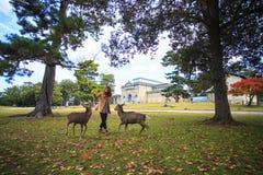 Nedgångsäsong av den Nara staden, Japan med trevlig yellowred färg Arkivbild