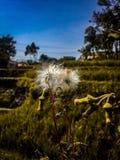 Nedgångsäsong som förbluffar med elkraft Fotografering för Bildbyråer