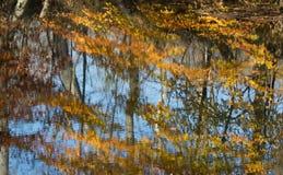 Nedgångsidor och träd reflekterade på vatten fotografering för bildbyråer