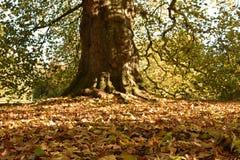 Nedgångsidor på grunden av ett forntida träd royaltyfri fotografi