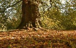 Nedgångsidor på skoggolvet fotografering för bildbyråer