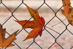 Nedgångsidor som fångas i staket arkivbild