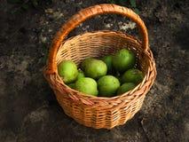 Nedgångskörd av frukter i pottle royaltyfri foto