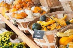 Nedgångskörd: Mini Gourds och pumpor Arkivfoto