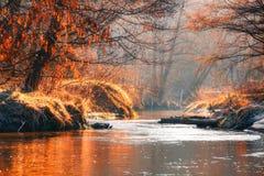 Nedgångskog in med den rena naturen för mist arkivfoto