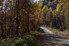 Nedgångskogväg, Kanada arkivbilder