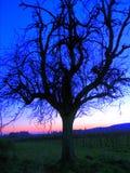 Nedgångträd i solnedgång arkivfoto