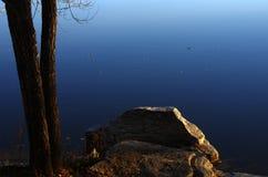 Nedgångträd nära en sjö Royaltyfri Bild
