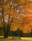 Nedgångträd och bänk Fotografering för Bildbyråer