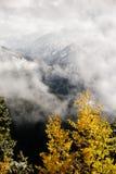Nedgångträd på en bergöverkant Arkivfoto