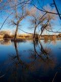 Nedgångträd som reflekterar på fristad för vattenBosque del Apache djurliv arkivbilder