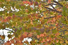 Nedgångträdfärger arkivbild