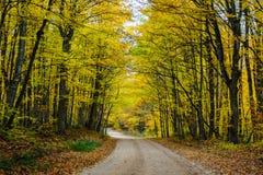 Nedgångvägen i skog av Pictured vaggar medborgaren Lakeshore Munisin Fotografering för Bildbyråer