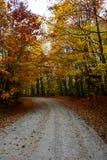 Nedgångvägen i skog av Pictured vaggar medborgaren Lakeshore Munisin Arkivbild