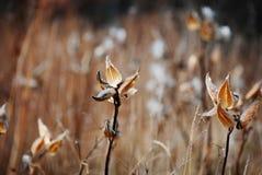Nedgångvegetation i ett fält i träna Fotografering för Bildbyråer