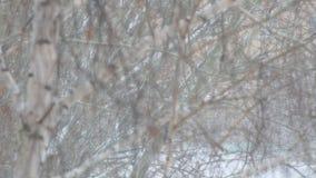 Nedg?ngar f?r tung sn?, sn?storm p? bakgrund av tr?d lager videofilmer