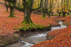Nedgång i skogen Royaltyfria Foton