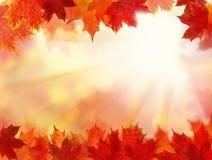 Nedgångbakgrund med Autumn Leaves Royaltyfri Foto