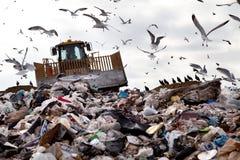 Nedgrävning av sopor med fåglar Royaltyfria Bilder