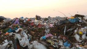 Nedgrävning av sopor och fåglar på solnedgången stock video