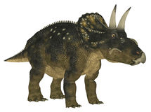 Nedoceratops Stock Photography