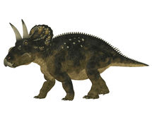 Nedoceratops Royalty Free Stock Image